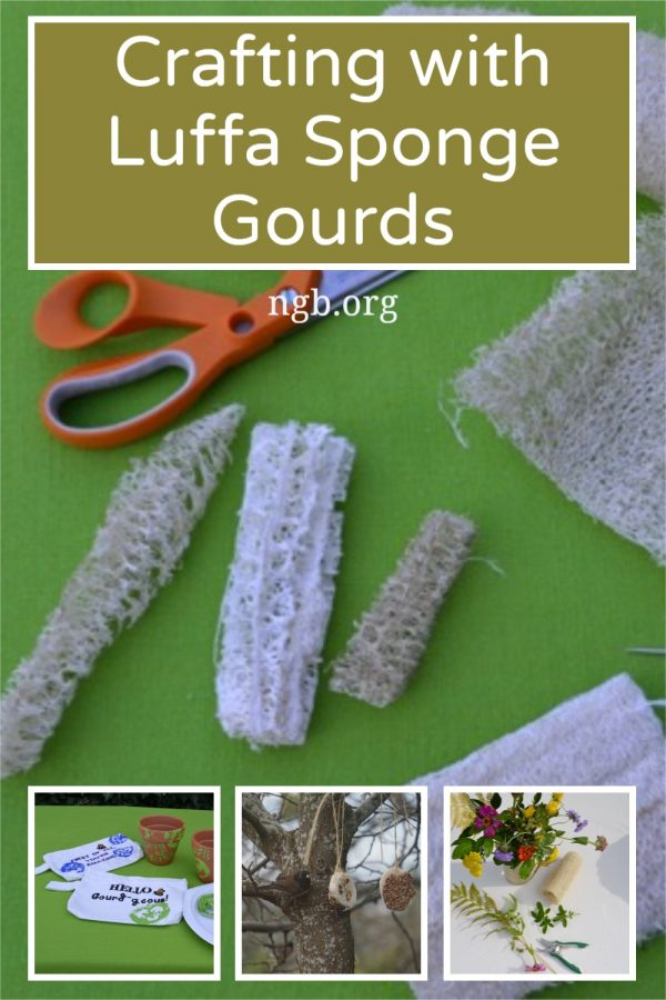 Crafting with Luffa Sponge Gourds are easy and fun to do / National Garden Bureau