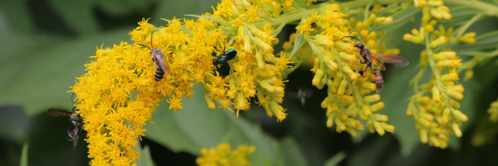 Beneficial Wasps and You - National Garden Bureau