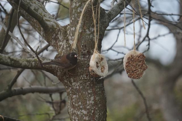 Easy to make Luffa Treats for Wild Birds / National Garden Bureau