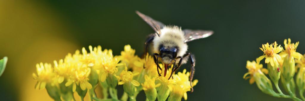 Flower Power in the Garden - Help pollinators with these tips | National Garden Bureau