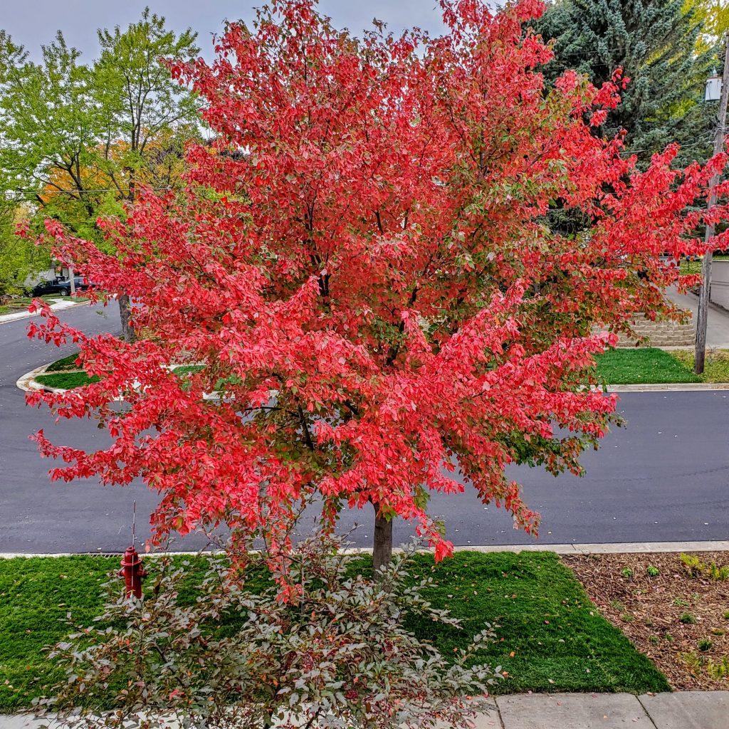 Fall is the season where trees begin to give their show - National Garden Burea