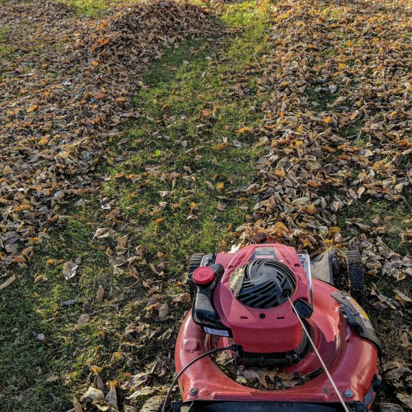 Chop leaves with the lawn mower to place the leaves n compost or on the vegetable garden bed / National Garden Bureau