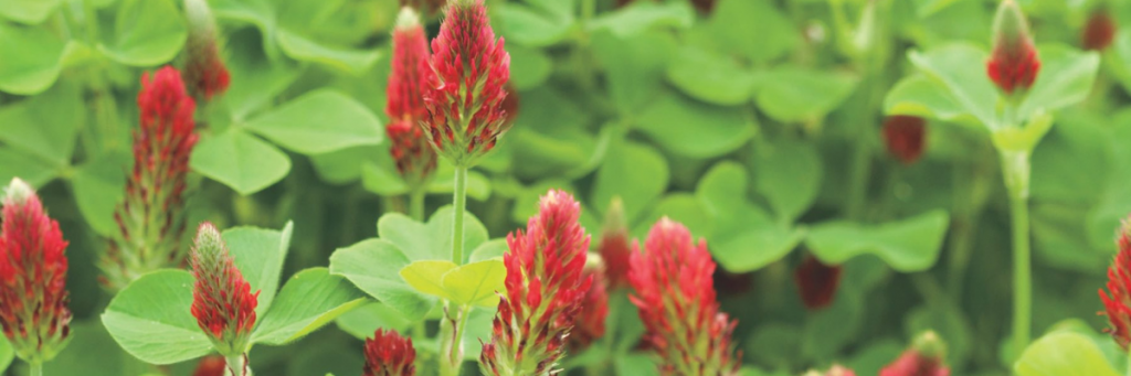 Cover Crops - How to Rebuild Healthy Soil for Next Year's Garden with Cover Crops | National Garden Bureau