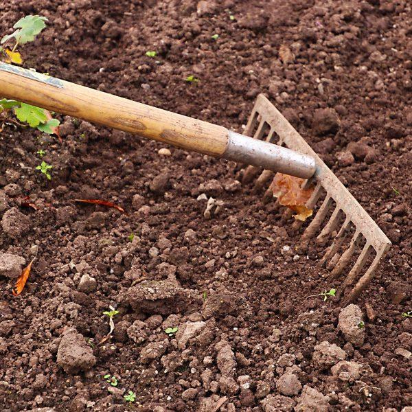 Prep the soil: Rake and loosen the top inch of soil for soil reguvenation | National Garden Bureau
