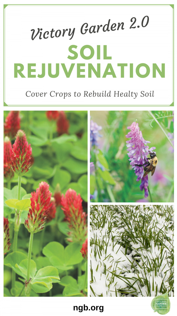 Putting Your Garden to Bed: How to Rebuild Healthy Soil for Next Year's Garden with Cover Crops