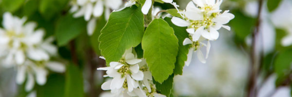 Learn what shrubs can do for your garden and how to pick one to fit your space